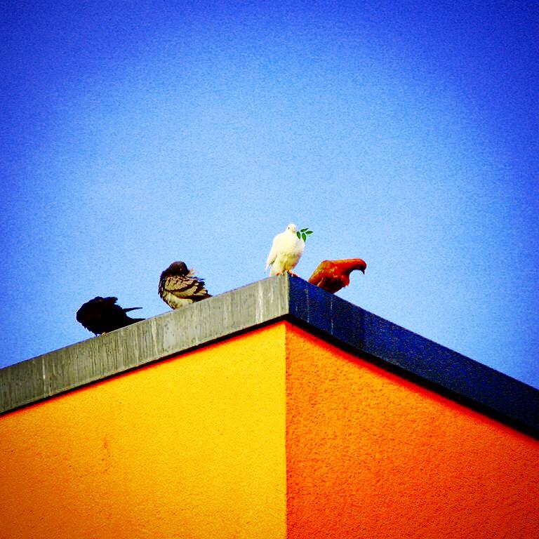 Der Frieden der Tauben - Photo: Eric Reppe
