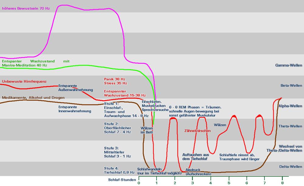Hirnfrequenzen-Hirnwellen-Schlafphasen-rem-phasen